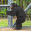 The University of Louisiana at Lafayette will be transferring 220 retired research chimpanzees to a facility in northern Georgia, as part of a partnership with the nonprofit organization Project Chimps.
