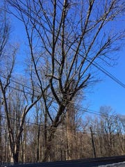 A falling tree near the Convent Station in Morris Township