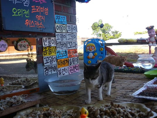 South Koreans Watch Cats Eating