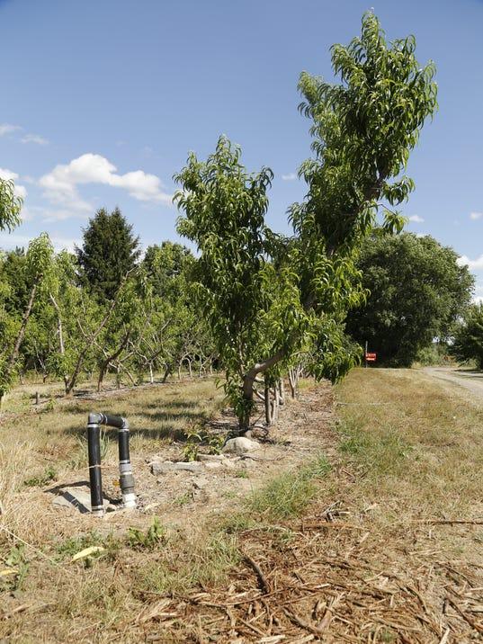ITH Indian Creek Farms T-burg 1