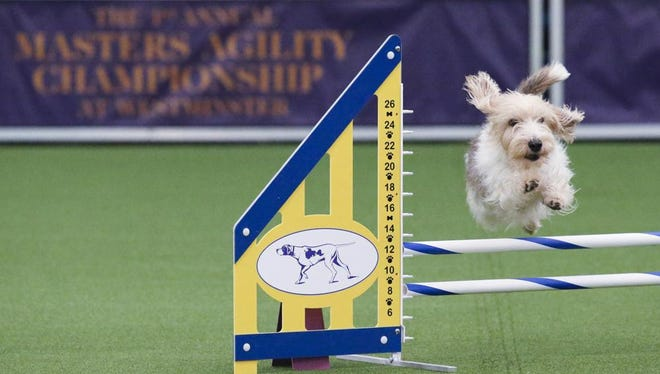 The Cincinnati and Warren County All Breed Dog Show happens this weekend at Butler County Fairgrounds in Hamilton.