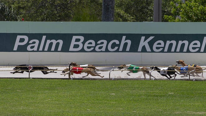 Live greyhound racing has resumed without fans at the Palm Beach Kennel Club in West Palm Beach. The dog track has been shut down to the public by the coronavirus pandemic. You can watch and wager at www.greyhoundchannel.com