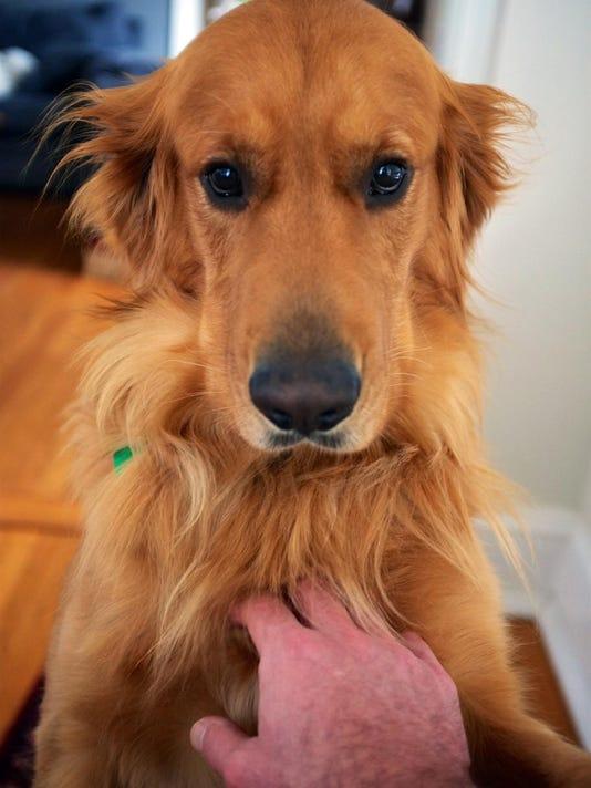 SmallBiz-Small Talk-Pets at Work