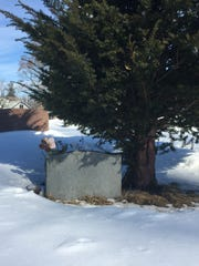 A hemlock tree thrives beside a grave Saturday at Mt.