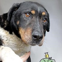 Adoptable pets for March 16-22