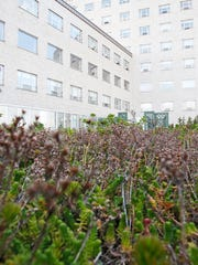 """St. John's Riverside Hospital in Yonkers installed a """"green roof"""" last year from a $1 million grant from the state Environmental Facilities Corporation."""