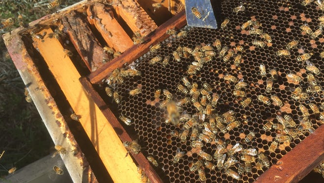 Get inside a beehive with a hive tool.