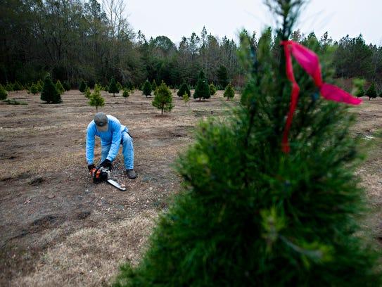 Wadsworth Tree Farm Keeps Christmas Tradition Alive