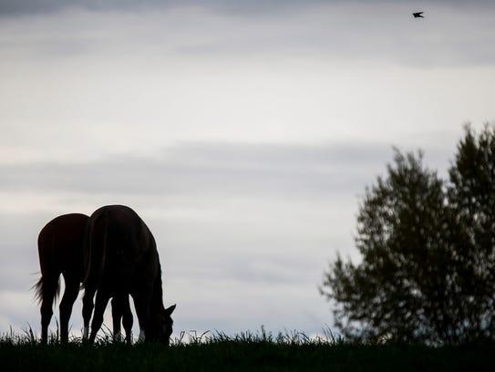A pair of horses graze in the pasture at Primatara