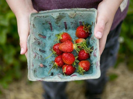WRT Strawberries 02