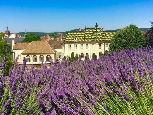 Guests can wander through the lavender garden and have