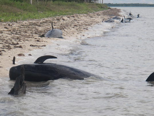 AP Beached Whales