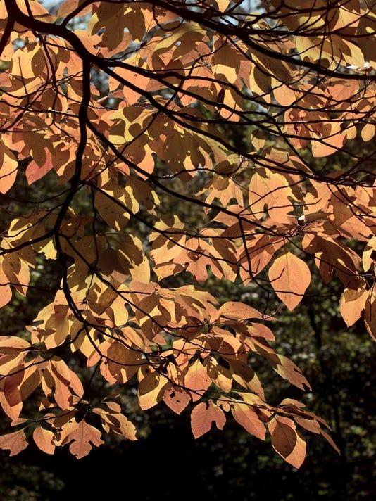 636108610269481531-leaves.jpg