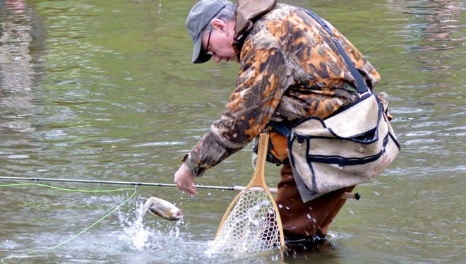 A leaping trout is brought to hand by a fisherman on Opening Day.