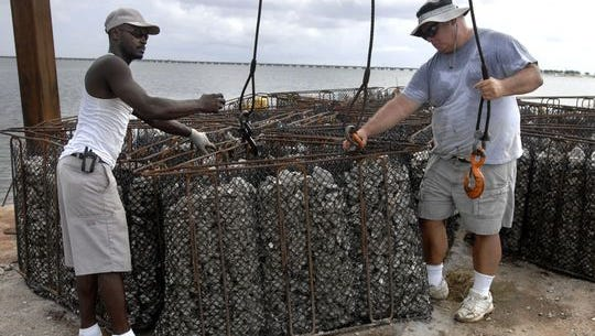 Willie Fountain, left, and Bill Carson hook up an oyster shell breakwater structure for deployment north of Deadman's Island in Gulf Breeze in 2009. Over 150 reef structures were deployed by Coastal Reef Builders to prevent further erosion to the island.