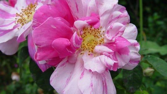 A flower.
