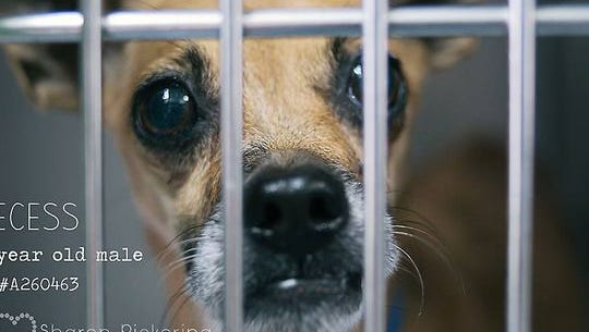 """Escambia County has announced the """"Clear the Kennels"""" public pet adoption event slated for noon to 6 p.m. Friday and Saturday in hopes of finding homes for some of the 348 animals filling its kennels."""