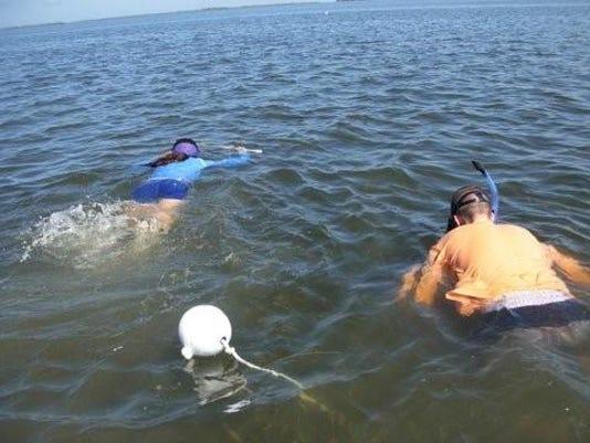 scallop snorkel