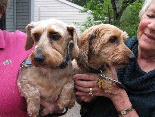 SAL0509-pet adopt 2