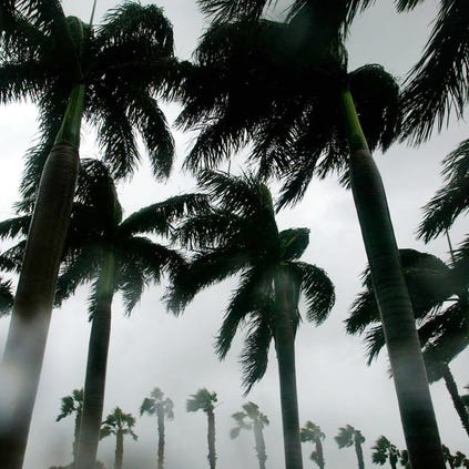 FORT PIERCE, FL - SEPTEMBER 4: Tropical storm force winds from Hurricane Frances blow through trees September 4, 2004 in Fort Pierce, Florida. Hurricane Frances is a slow moving category 2 hurricane that is expected to effect Florida for days.  (Photo by Jose Jimenez/Getty Images)