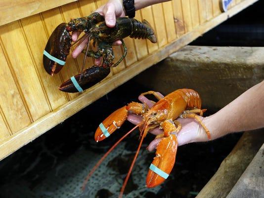 Orange Lobster