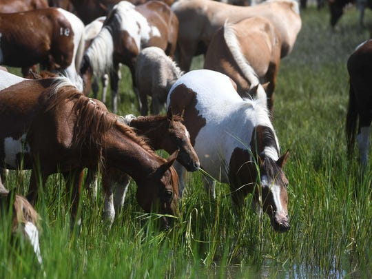 A vaccination program to protect wild horses from a swamp disease that killed seven ponies in 2018 is showing encouraging results on Chincoteague Island in Virginia.