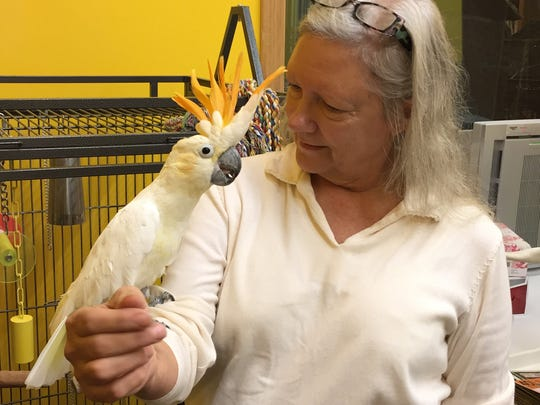 Happy, a citron crested cockatoo, perches on Donna Hiebert's forearm.