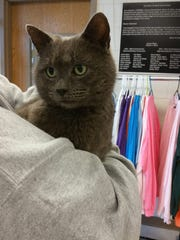 Photo of a lost pet from the Campbell County TN Animal Center.