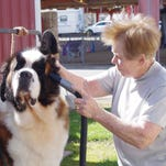 More than 750 compete in Shasta County dog show