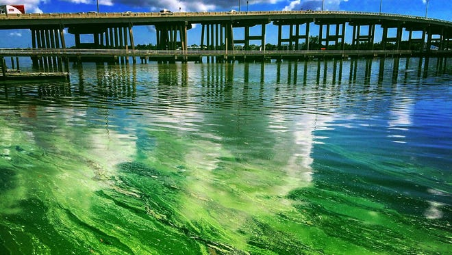 The high levels of algae have prompted Governor Rick Scott to declare a state of emergency.