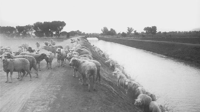Sheep herding was a large part of early Scottdale life.