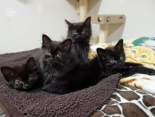 Another Chance Animal Welfare League is a no-kill animal