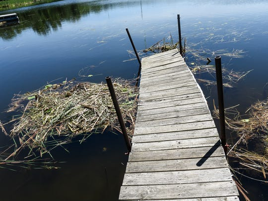 Floating bogs have damaged this dock on the shoreline
