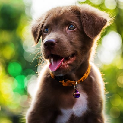 Warning: Cuteness overload ahead for National Puppy Day