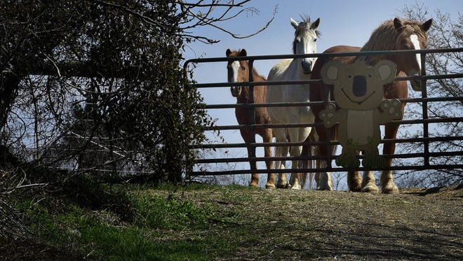 Horses at a Chambersburg area farm in March 2016.