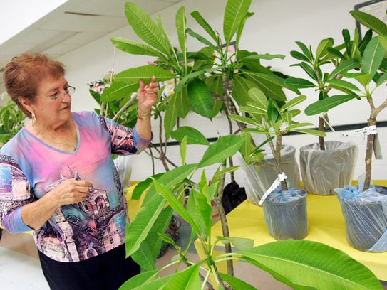 The Plumeria Society of South Texas will hold its annual