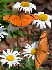 The Panhandle Butterfly House is seeking volunteers to serve as docents or tour guides.