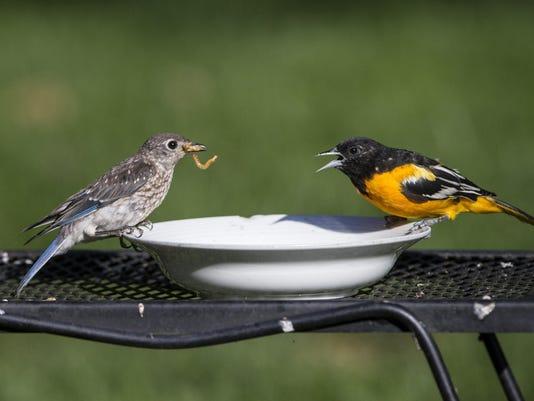 Beautiful Gardens: Minnesota yard is for the birds