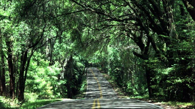 Tallahassee's tree coverage is the highest on record among comparable cities throughout the nation