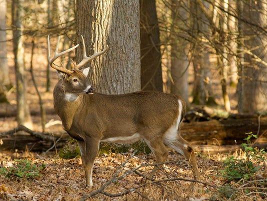 636555960000086869-NCWRC-White-tailed-deer-Melissa-McGaaw-3.jpg
