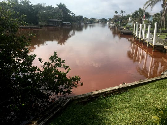 Reports of an algae bloom in the canal between Sunset