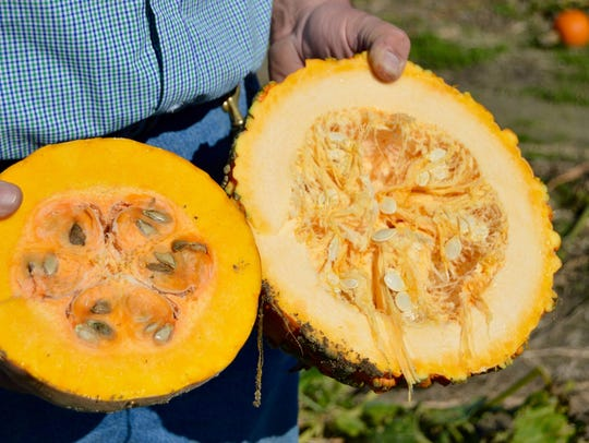 Rick Dickerson compares a La Estrella pumpkin, left,