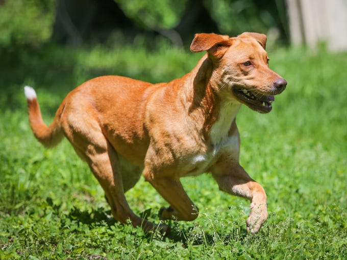 Sissy is an energetic, loving one-and-a-half-year-old