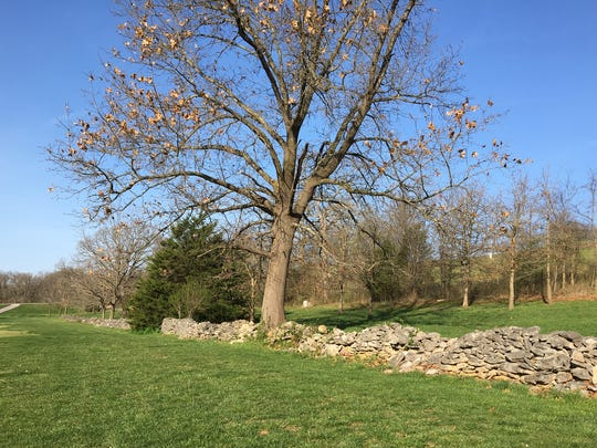 This stone wall along the fairway on the 13th hole