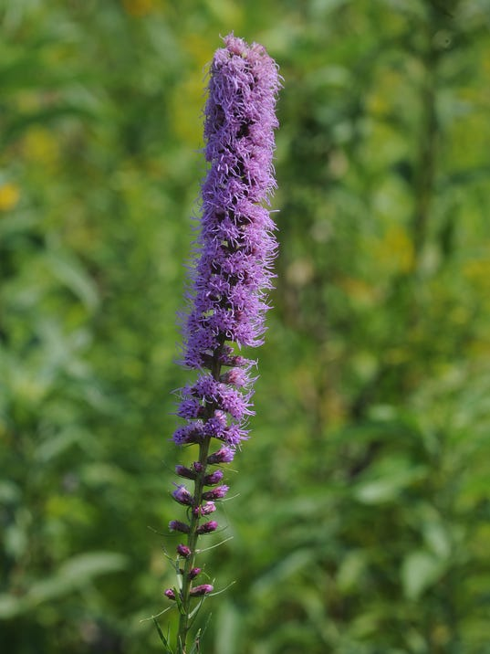 FON 081515 flower1.jpg
