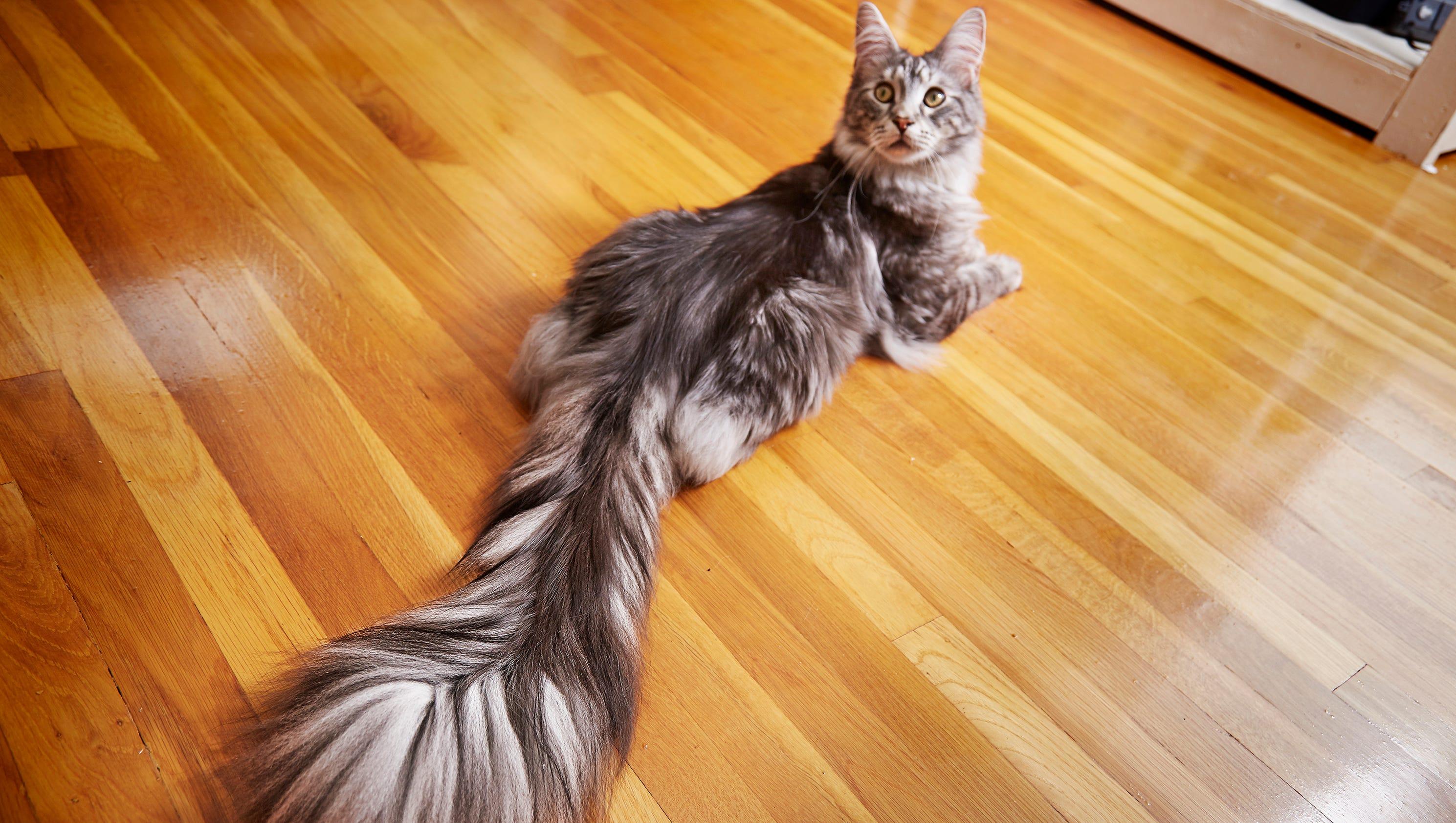 world record cats feared dead after farmington hills house fire