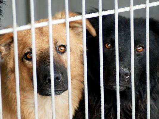 636185305667078920-dogs-cute.jpg