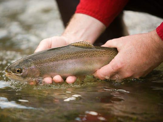 rainbow_trout_1-25-11.jpg