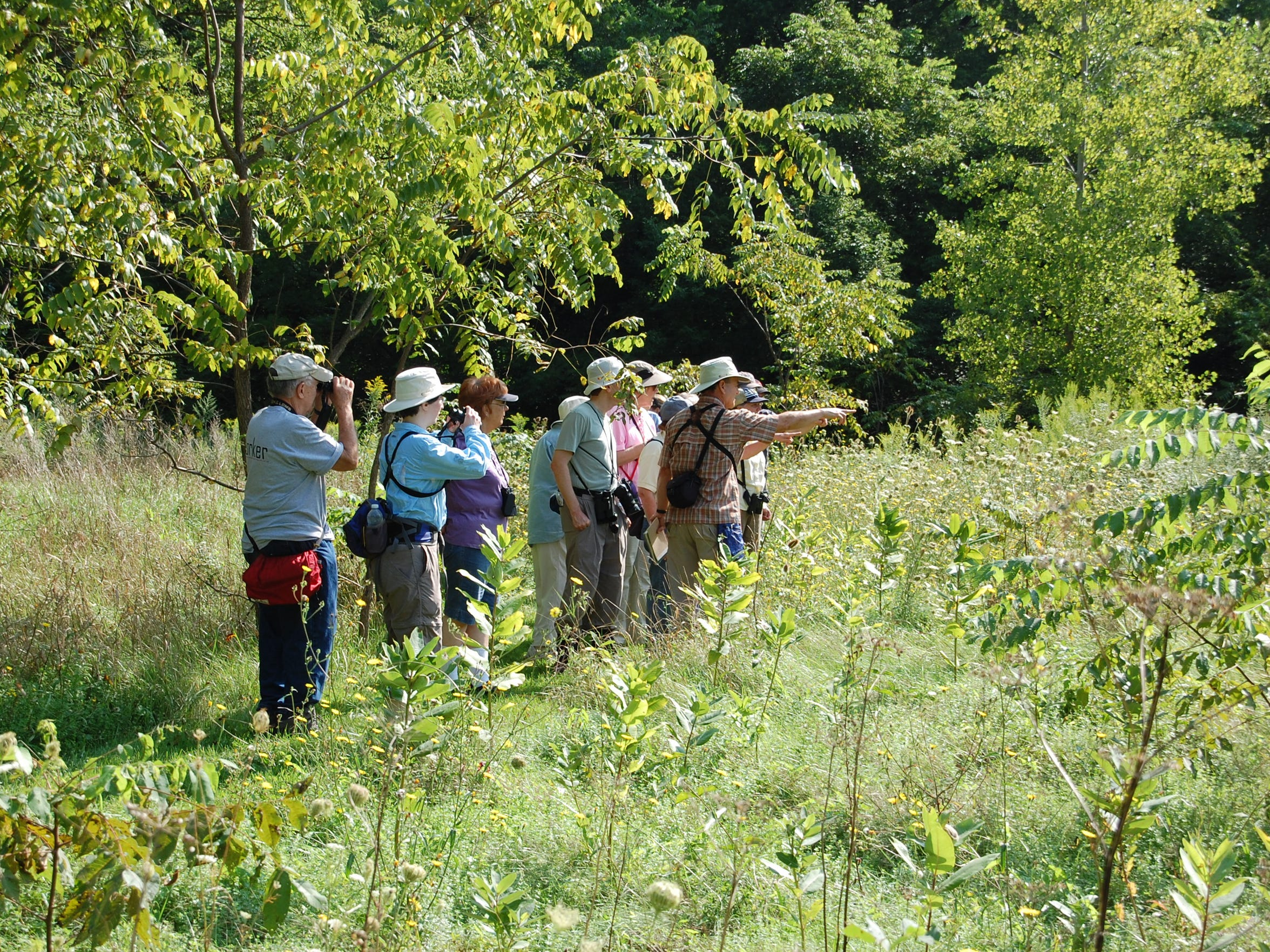 Experts lead an annual butterfly walk in Ganargua Creek Meadow Preserve; this year it's on Aug. 22.