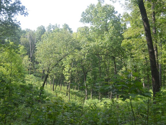 The Elk River Hills wild area is the 12th established
